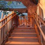 Treehouse stairs inside of Georgie Porgie